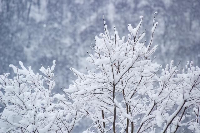 ダイエットに最適なのは冬!?冬が痩せやすくなるそのメカニズムとは?
